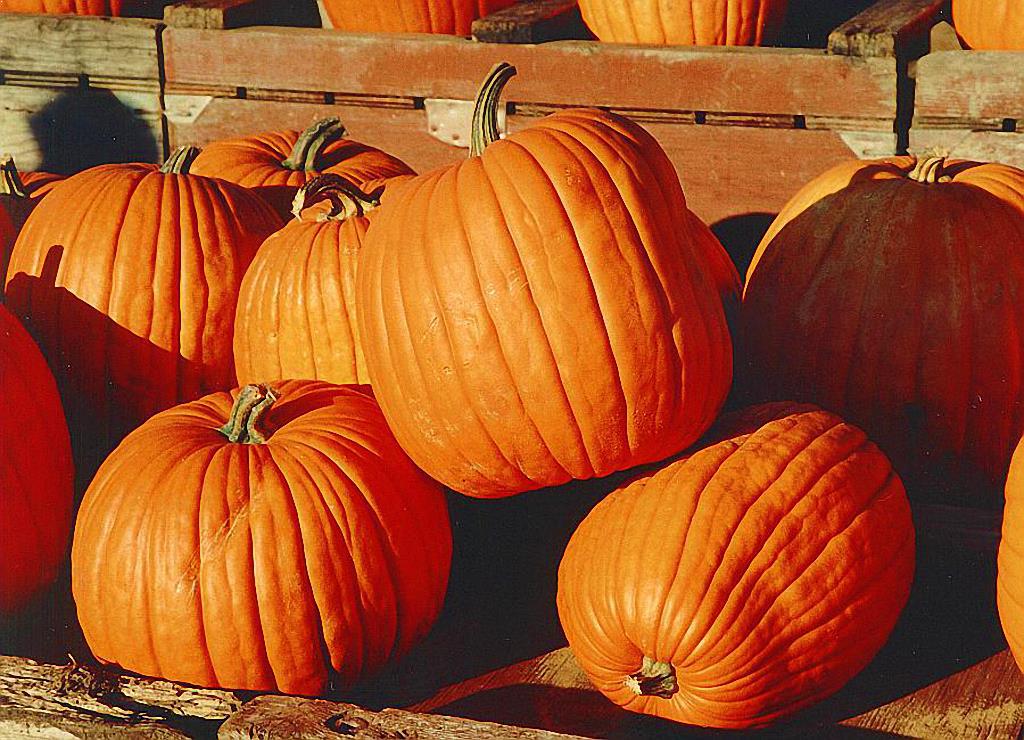 West Virginia Pumpkin Festival